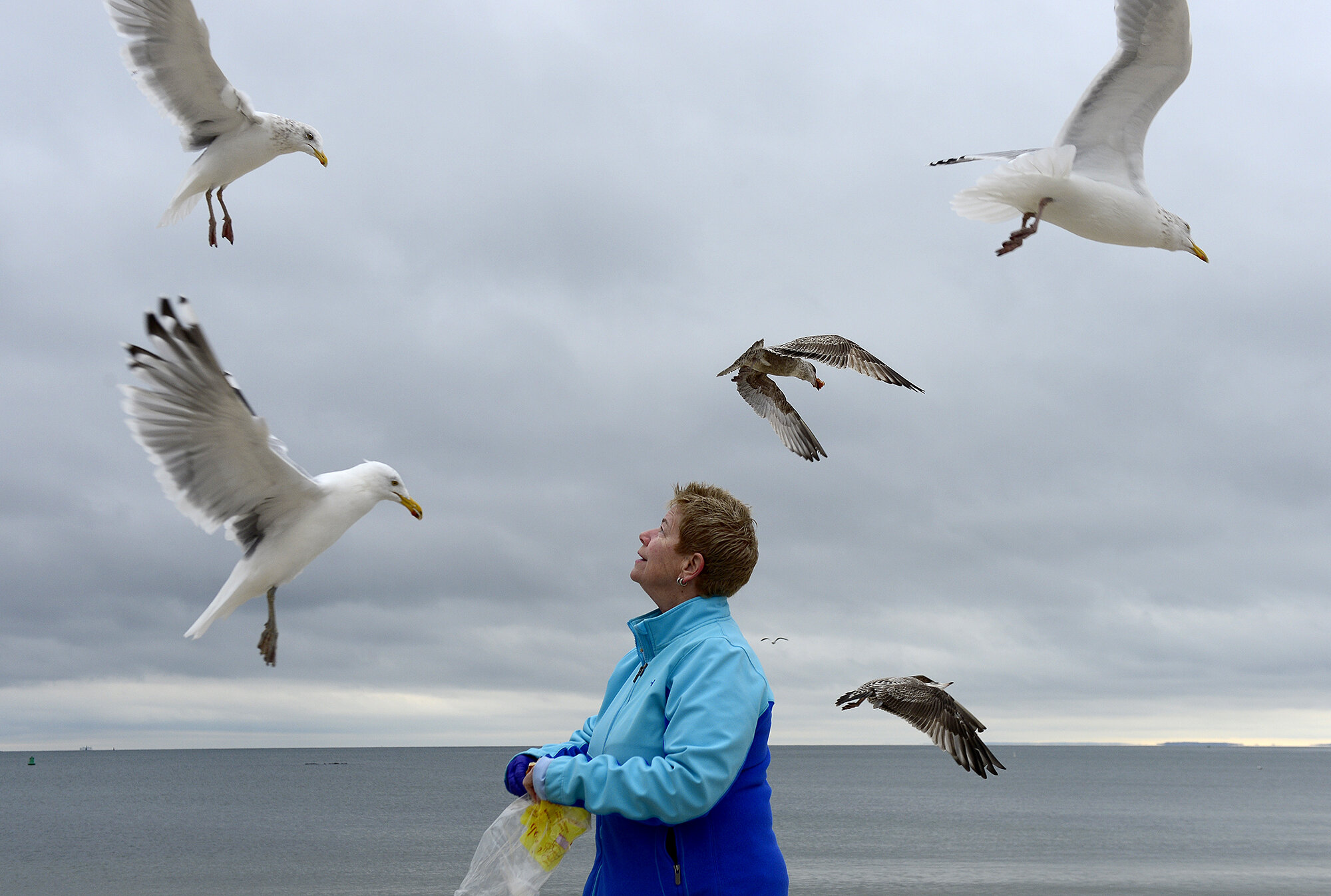 """Cindy Shea, of East Lyme, throws donuts to the seagulls at McCook Point Beach on Monday, February 18, 2019 in Niantic. Shea said she stops to feed the birds most days and usually brings donated food from Flanders Bake Shop that they were going to throw away. """"These birds eat better than I do,"""" she laughed. (The Day)"""