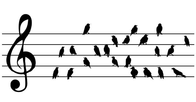 birdmusic.png