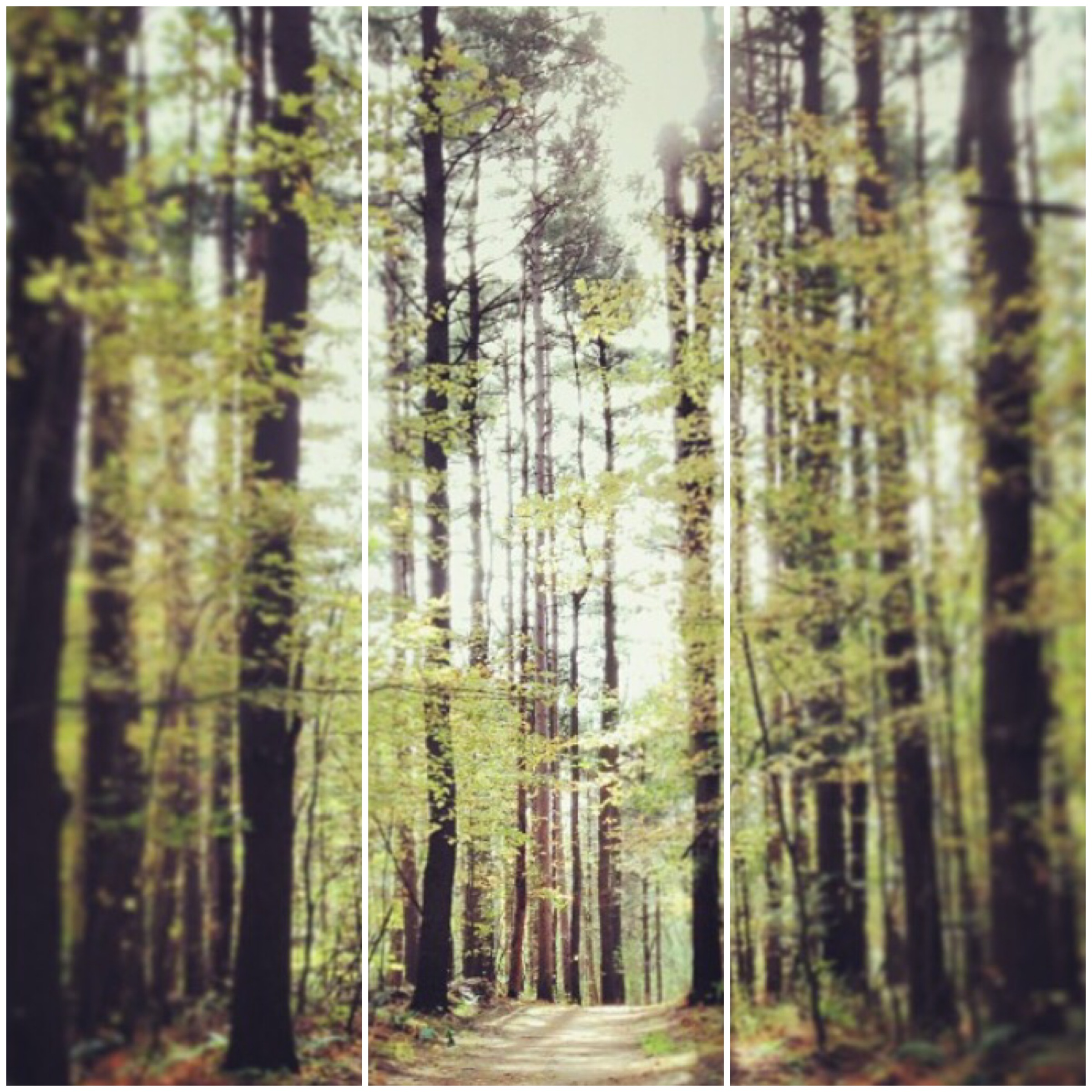 woods 3x