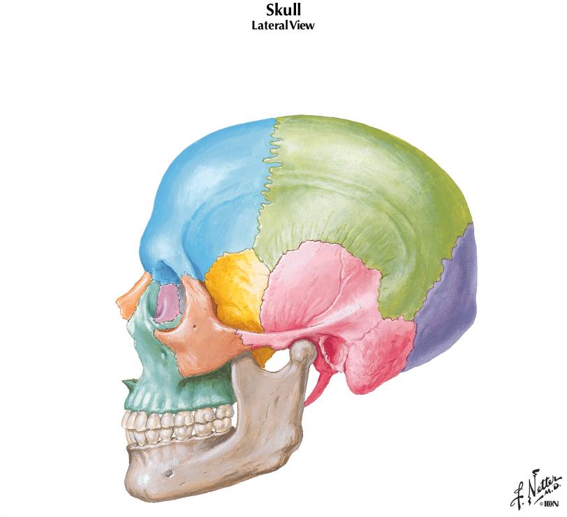 Skull. jpg