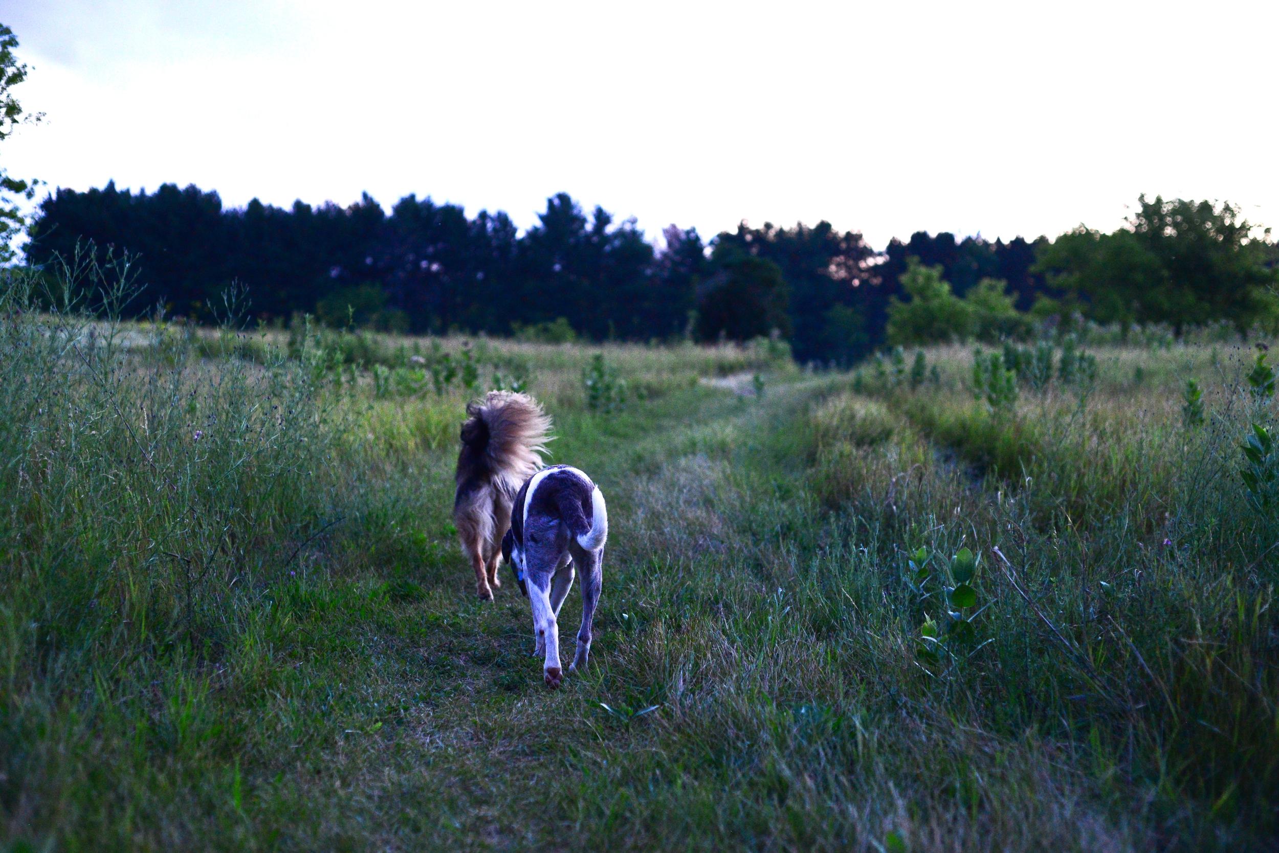dogshiking.jpg