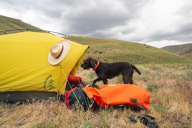 Pup tent redefined.... ⛺️ . . When your lil' doggie claims the last few feet in your tent, better hope the old dry-bags are sealed tight for those desert rain showers!  #teamwatershed  #gorove  #rivertime  #rhodathewonderdog #pudelpointer