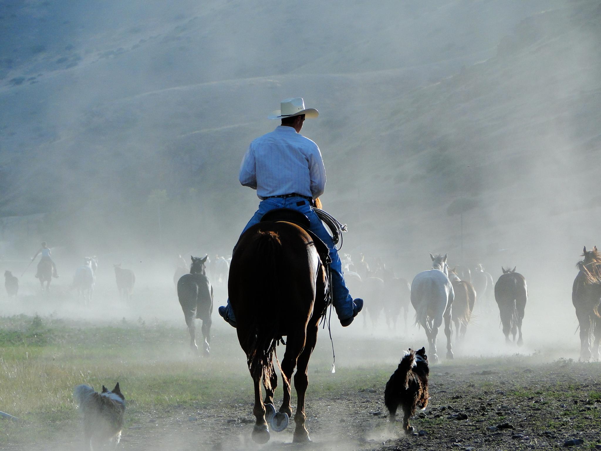 Imagine Harmony - Combining Faith, Reason,and Horsemanship.