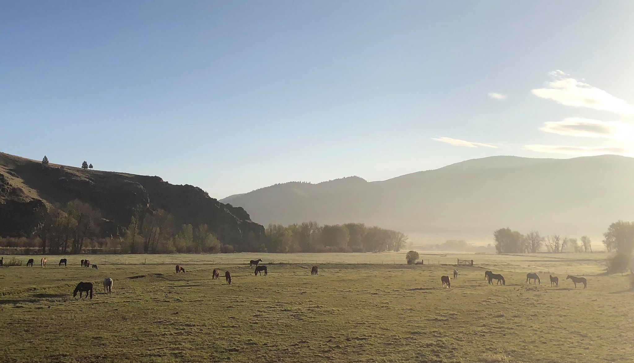 The herd milling about in the field by the entrance on a crisp spring morning.  Photo by Maria Anderson.