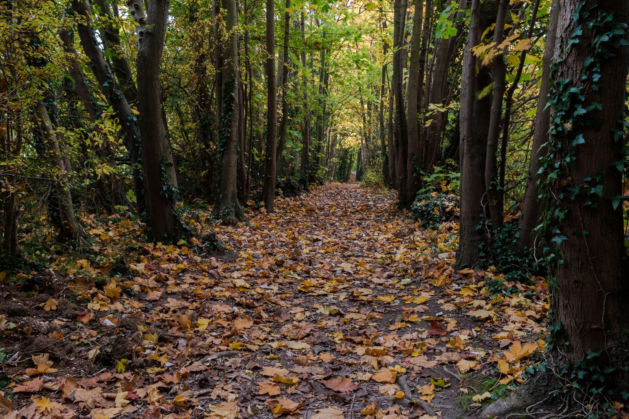 Woodland-1.jpg