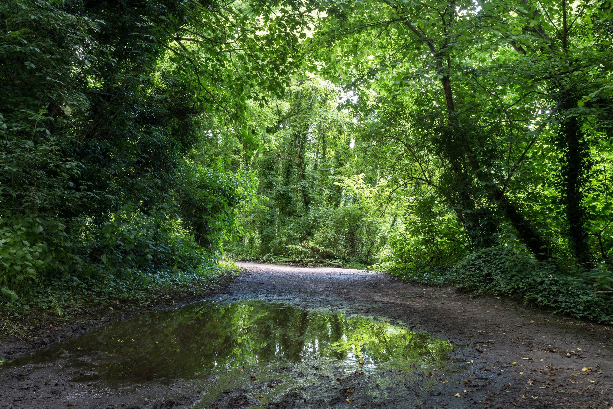 Woodland-3.jpg