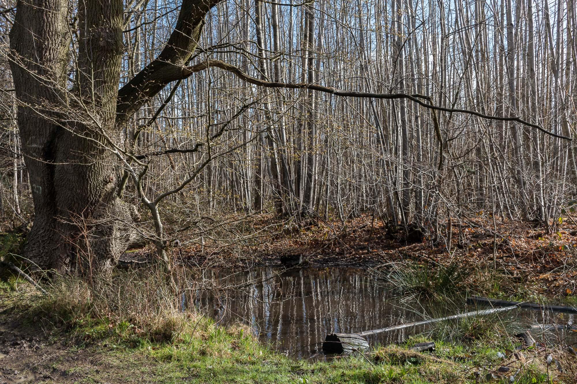 Woodland-2.jpg