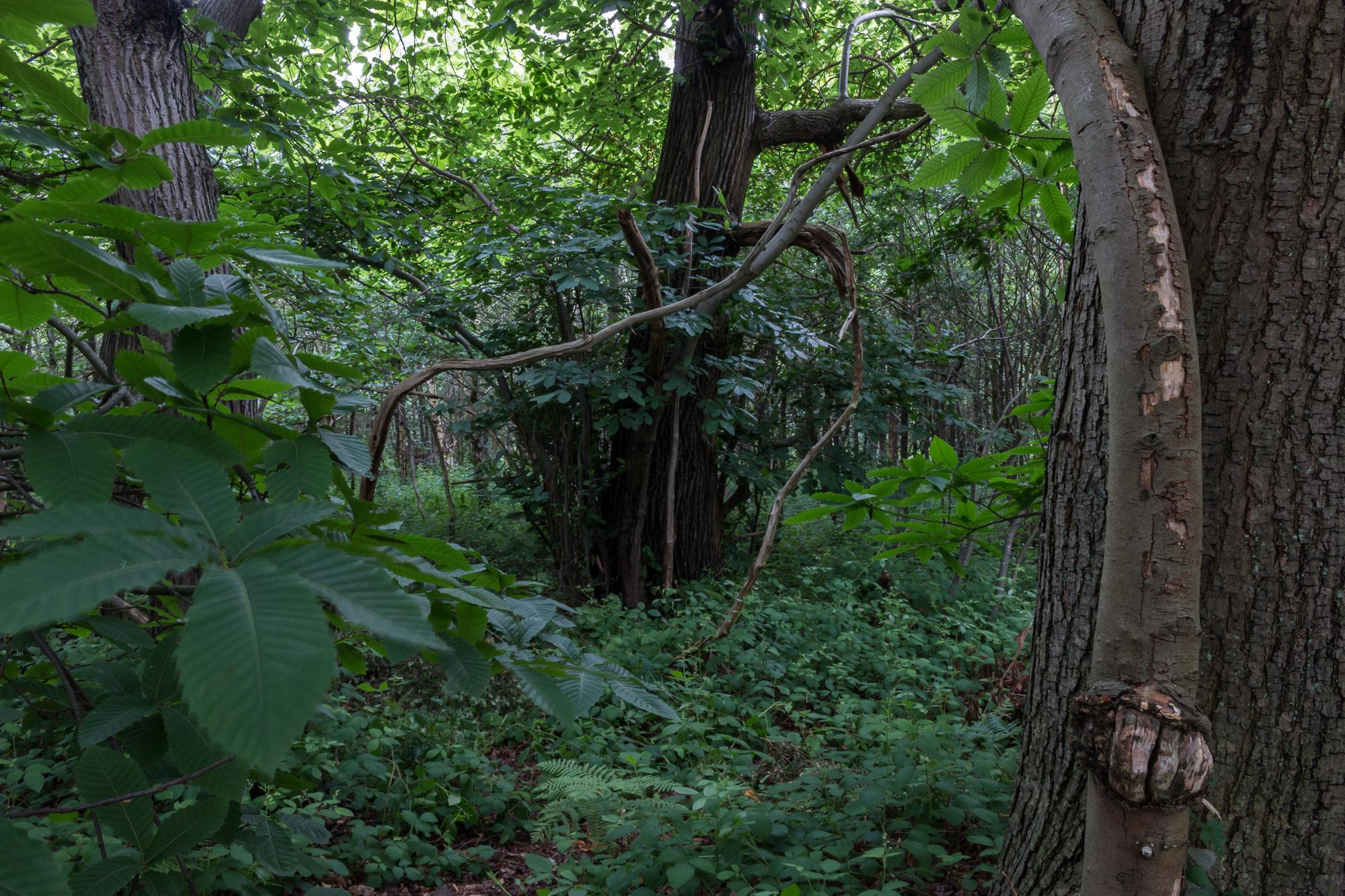 Woodland-5.jpg