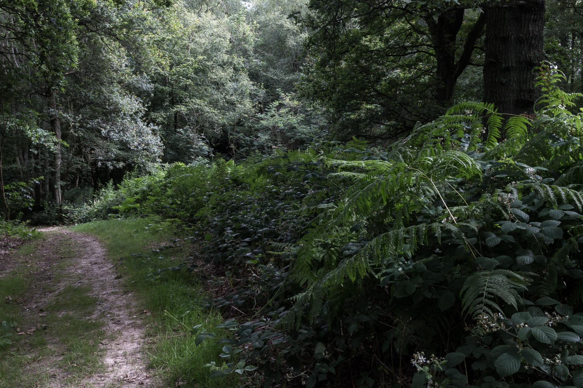 Woodland-7.jpg