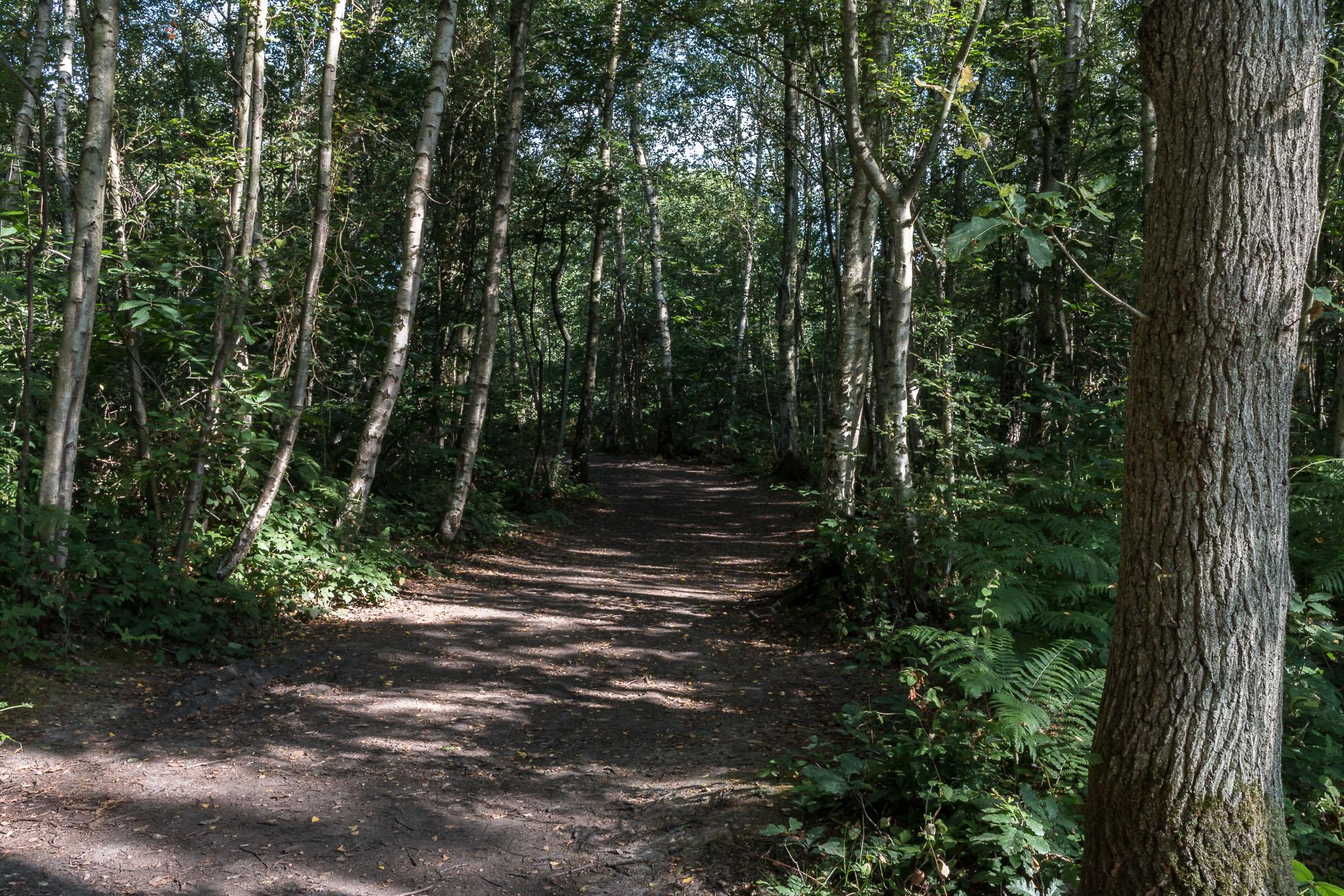 Woodland-8.jpg