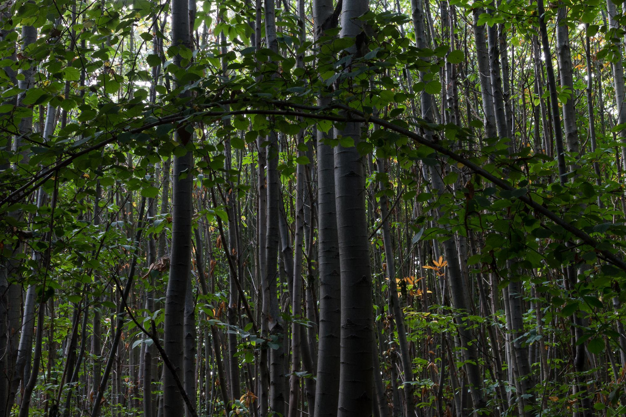 Woodland-9.jpg
