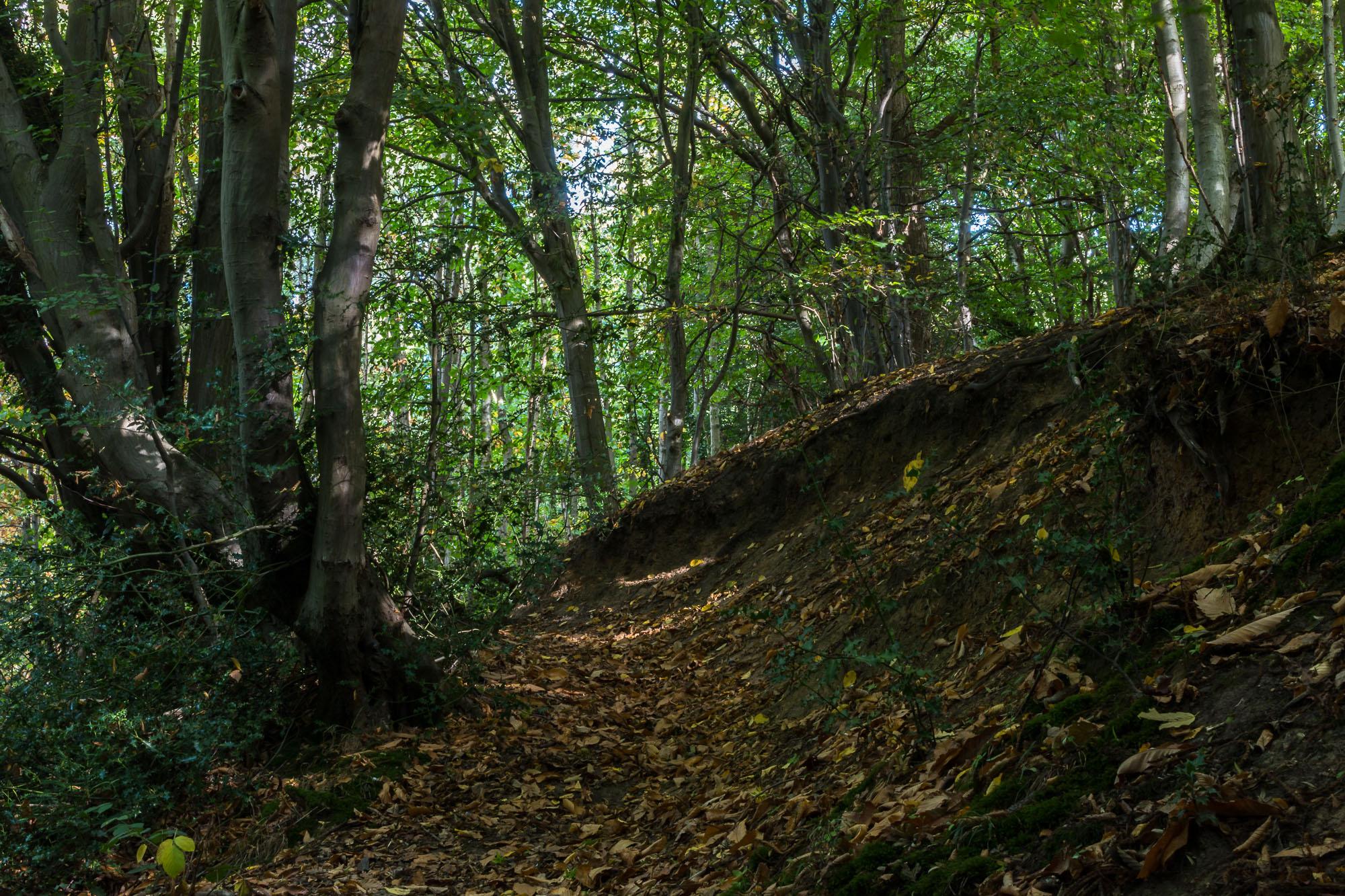 Woodland-10.jpg