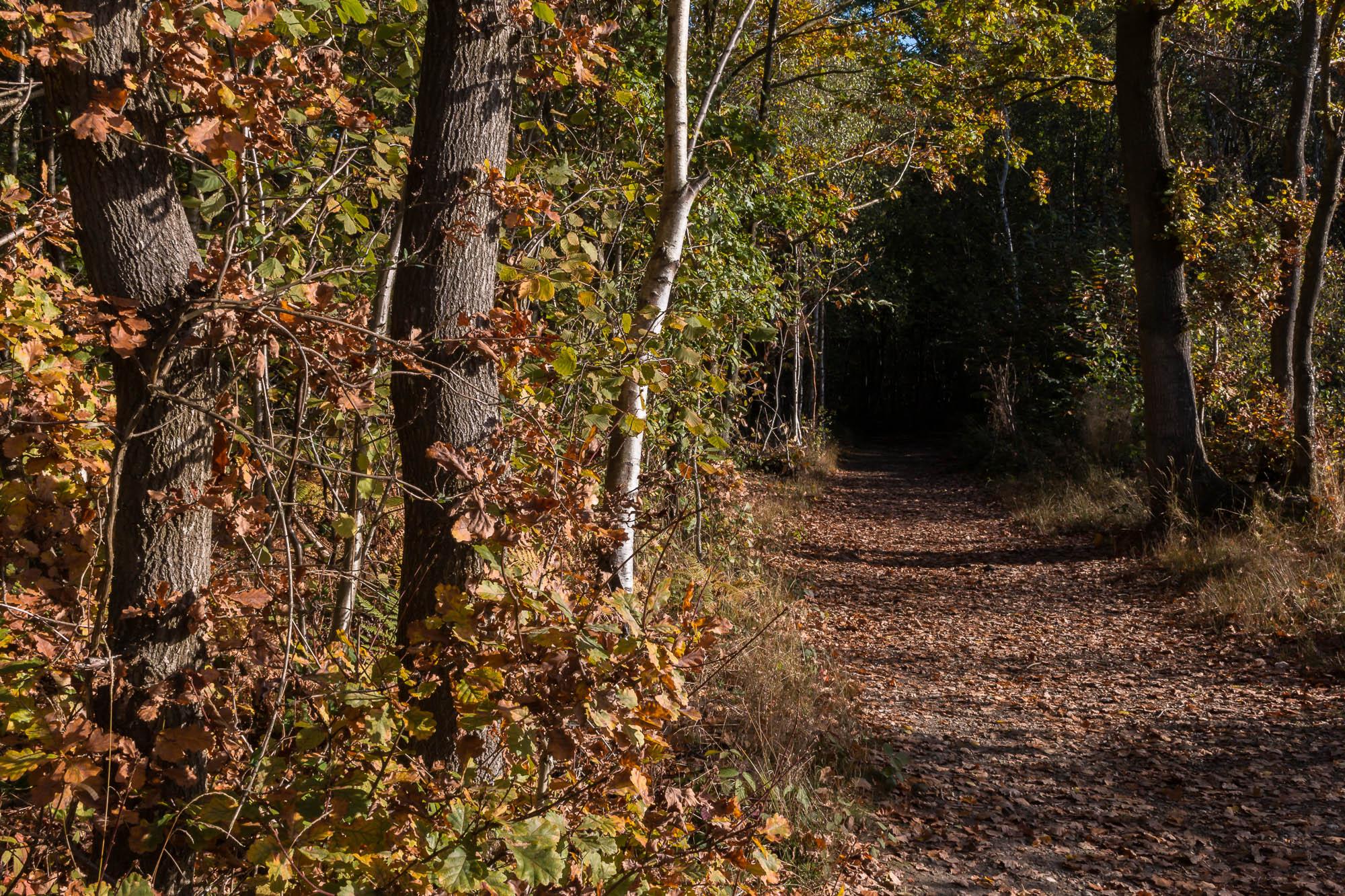 Woodland-13.jpg