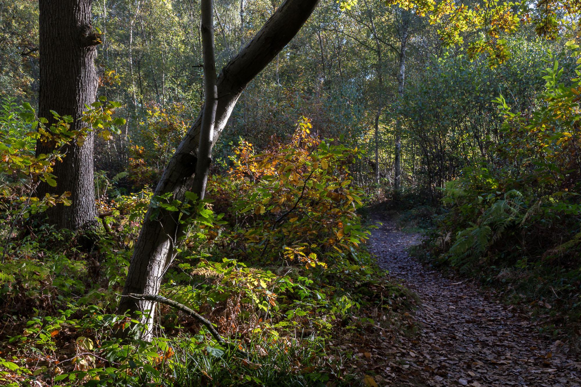 Woodland-14.jpg
