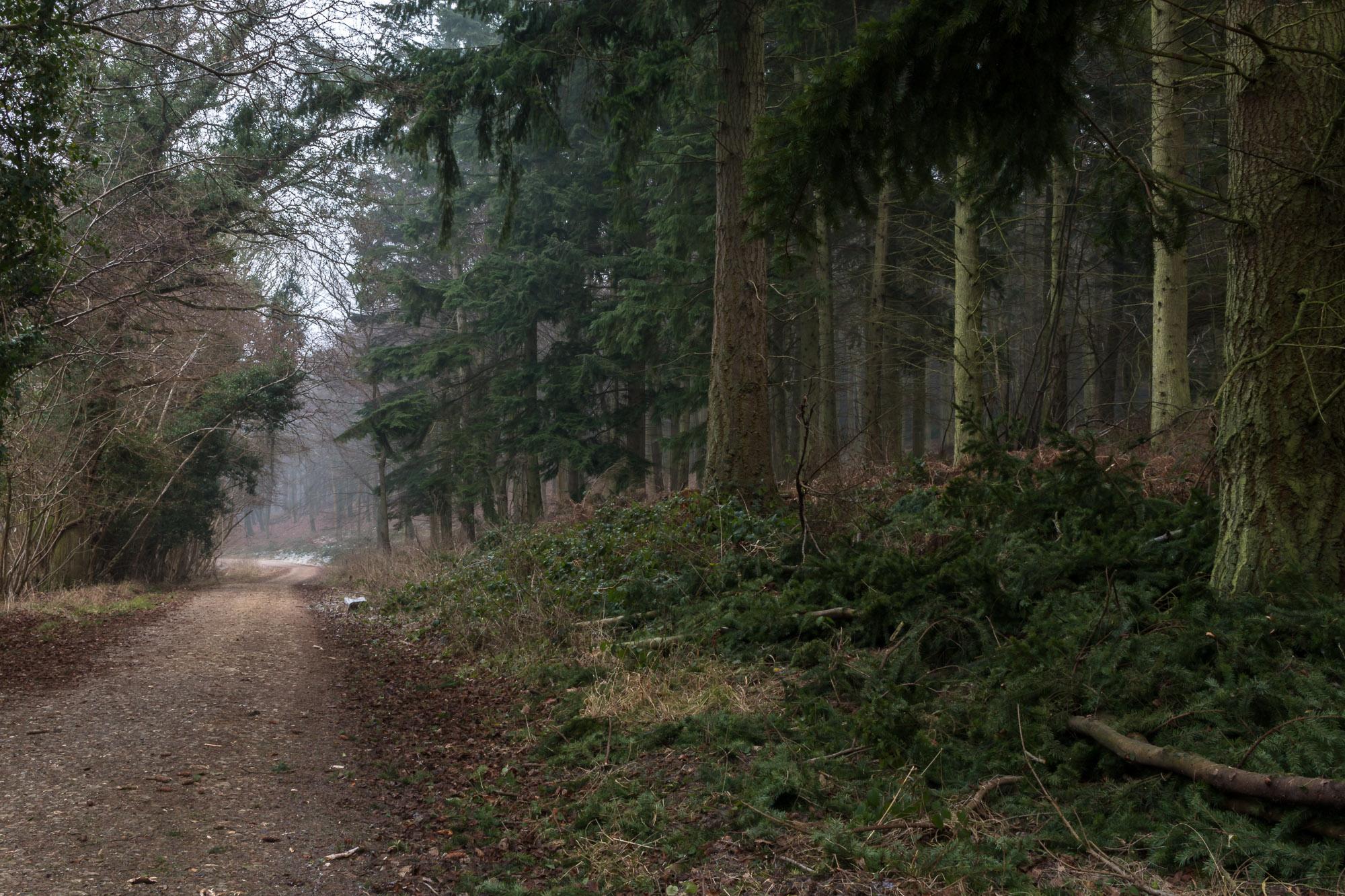 Woodland-4.jpg