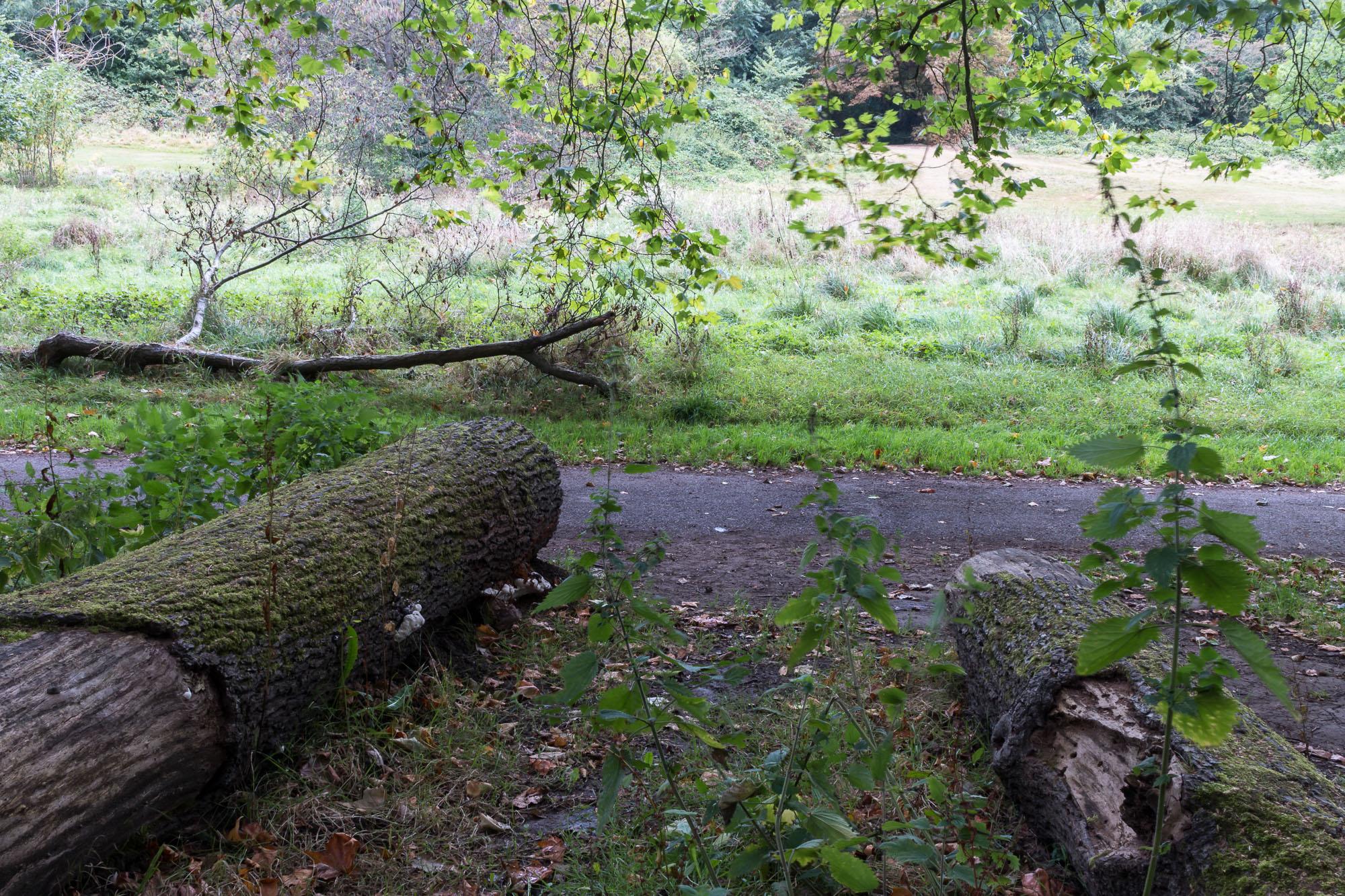 Woodland-21.jpg