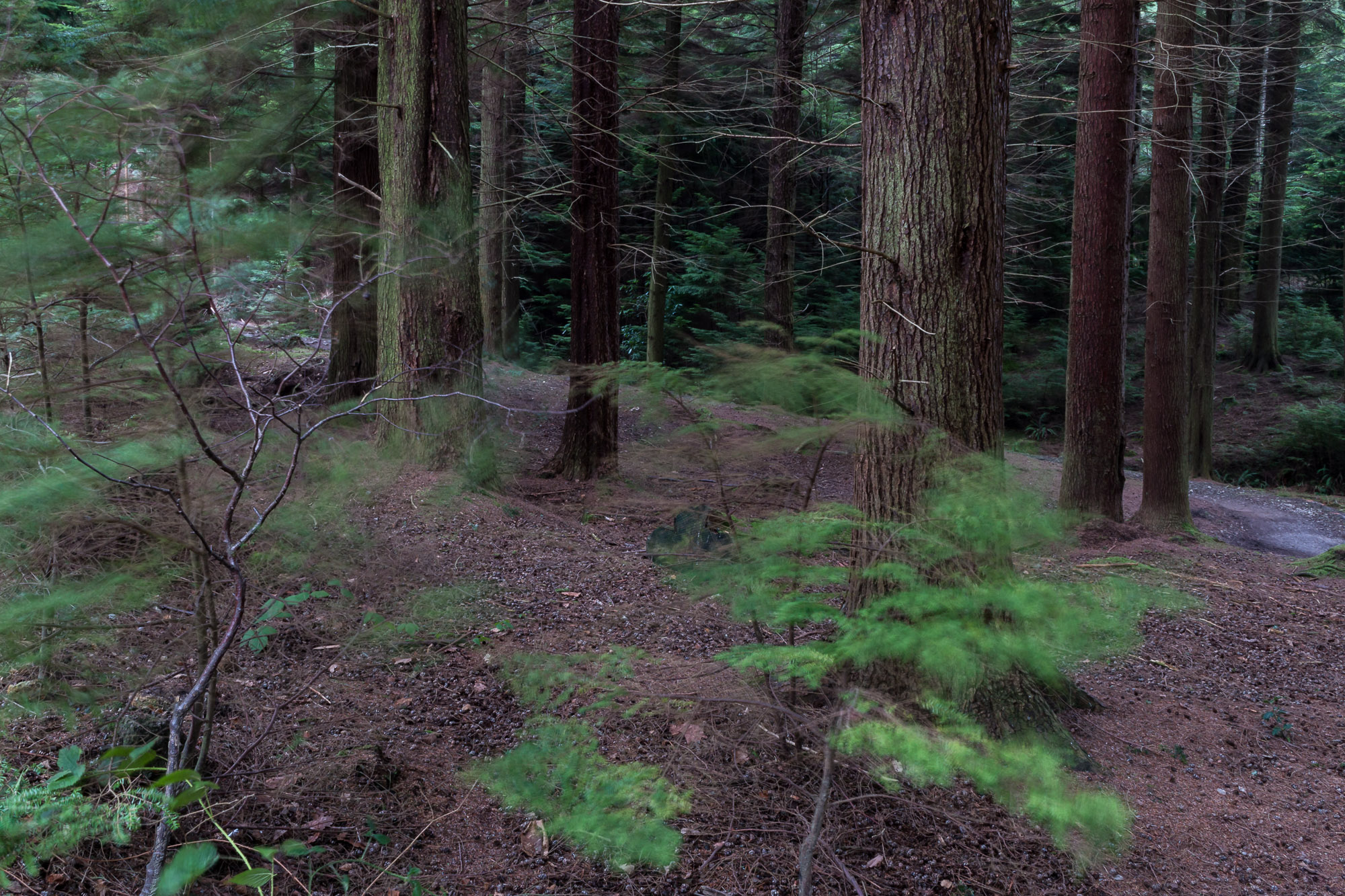 Woodland-23.jpg