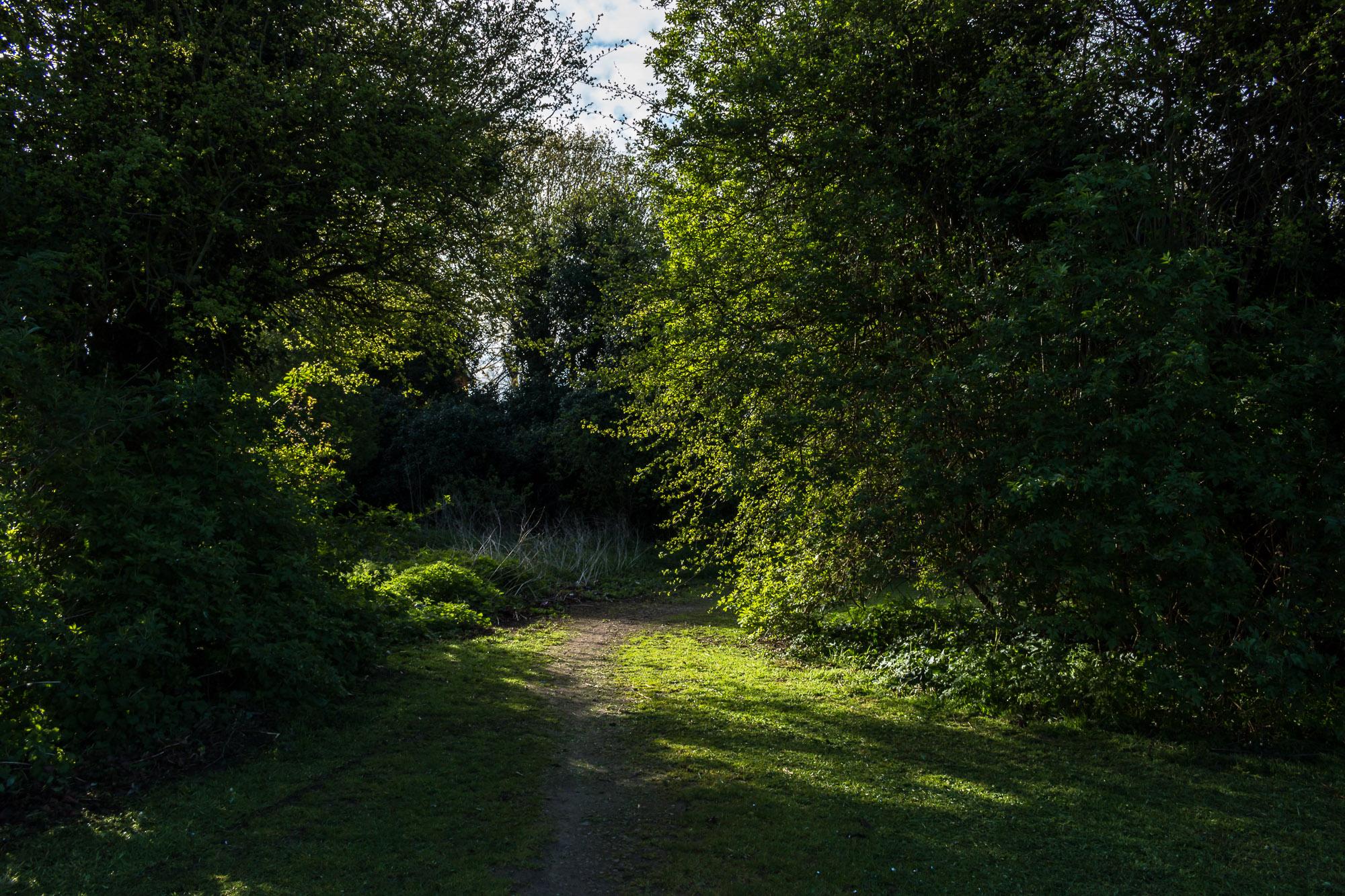 Milton Creek-2.jpg