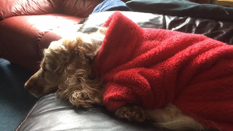 'We simply can't thank you enough. Tilly is living life to the full again.' -