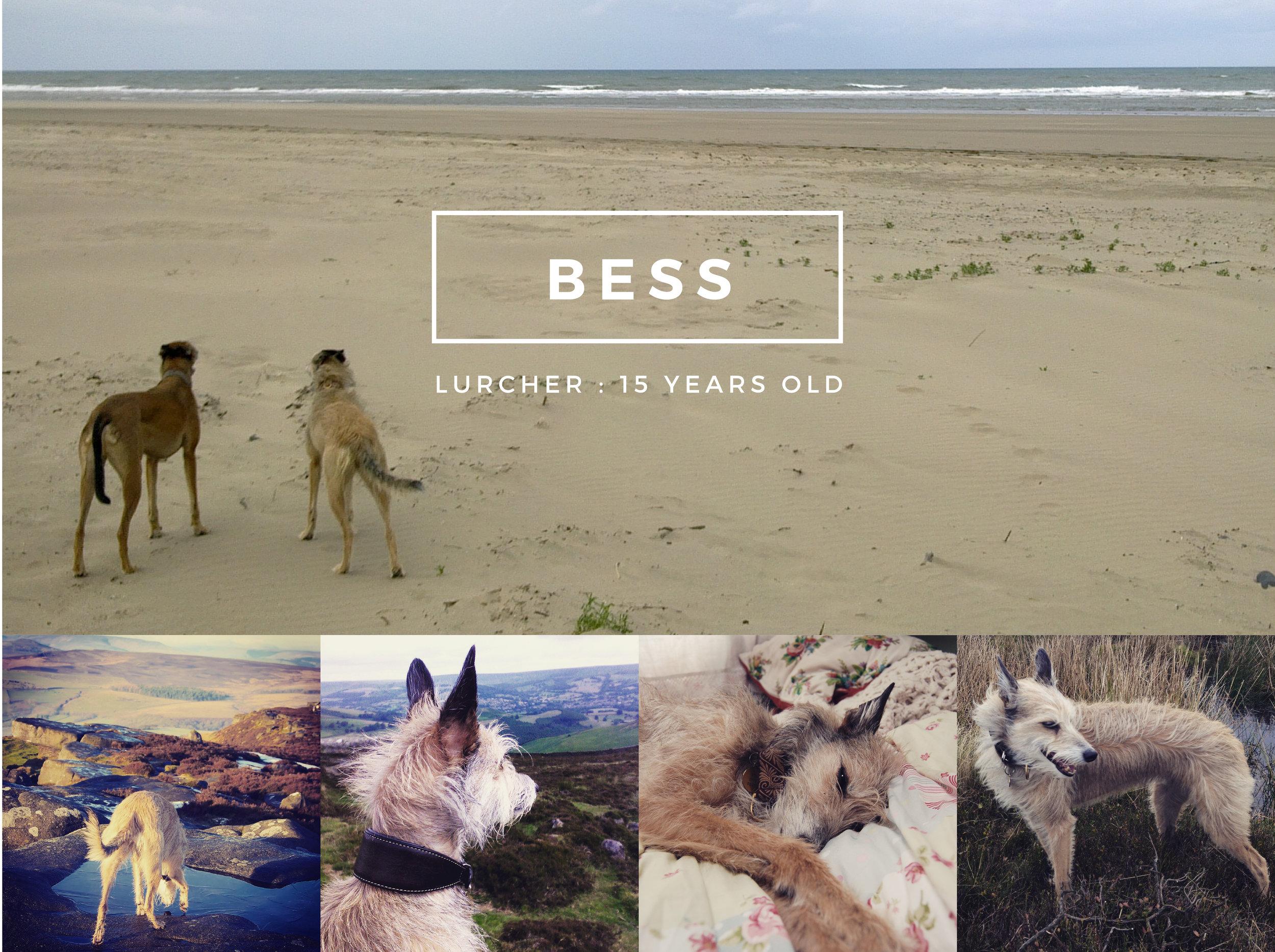 Moorland Canine Bess