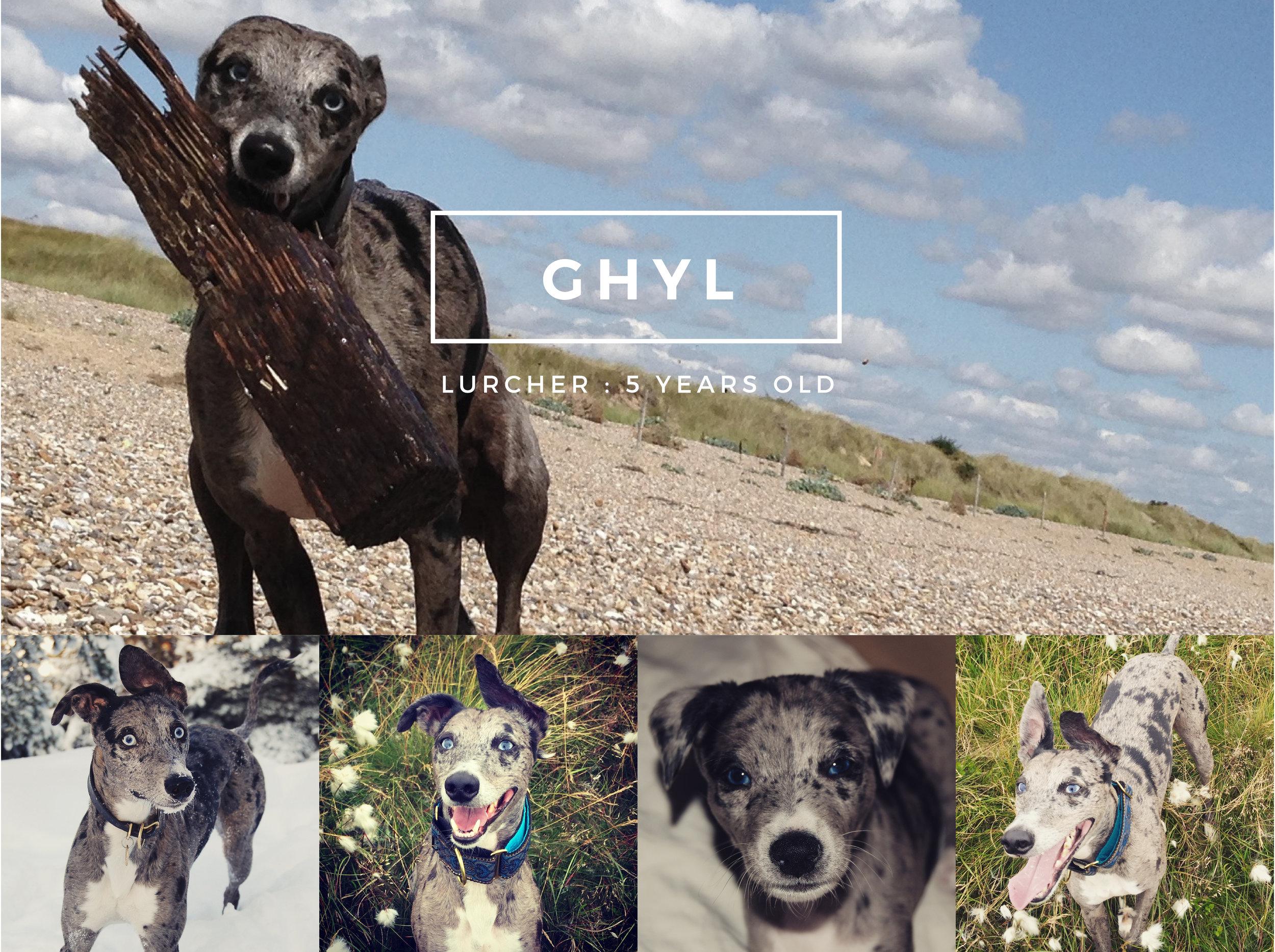 Moorland Canine Ghyl