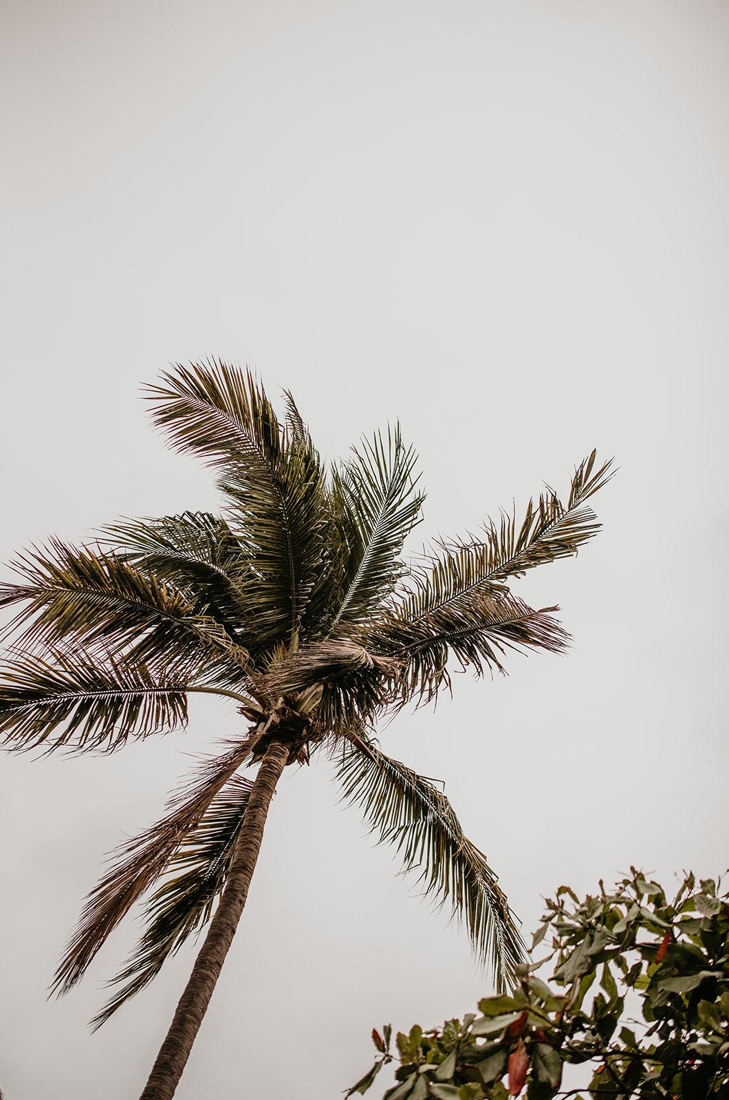 Billie Marie Goods Sayulita-221.jpg