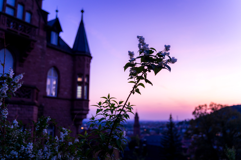 heidelberg-altstadt-silhouette-daniel-wohlleben.jpg