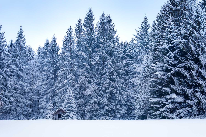 schwarzwald-hochstrasse-huette-schnee-winter-daniel-wohlleben.jpg