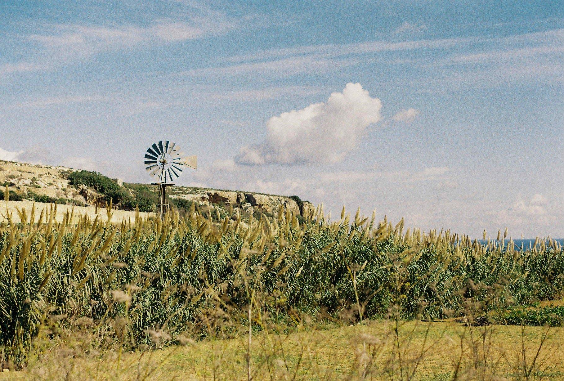 Malta farm