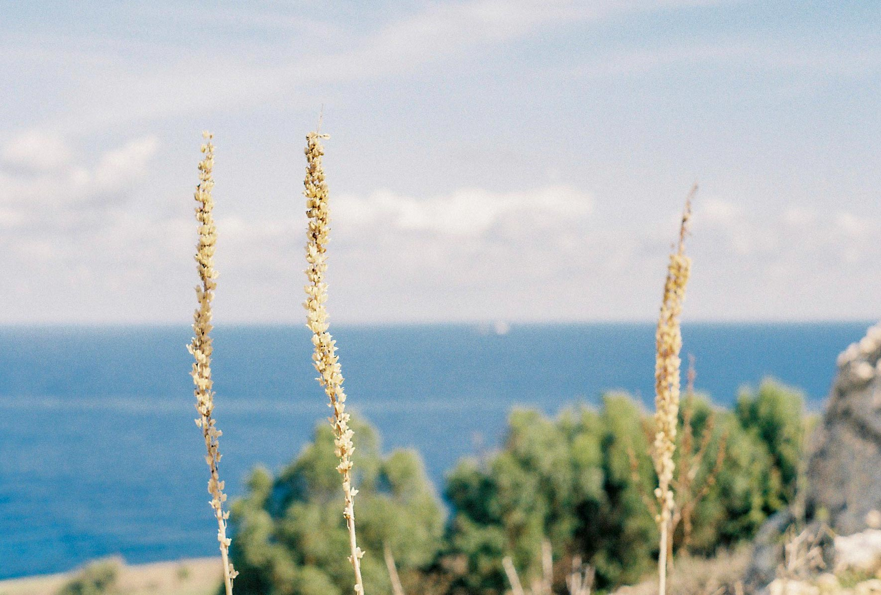 Malta plants