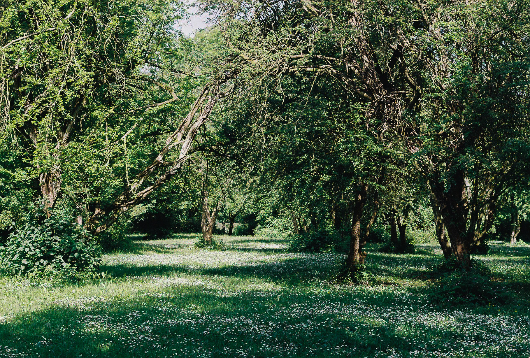 Woodlands on the Downs, Clifton, Bristol. May 2018 - Film photo Pentax K1000, Kodak Colour 250
