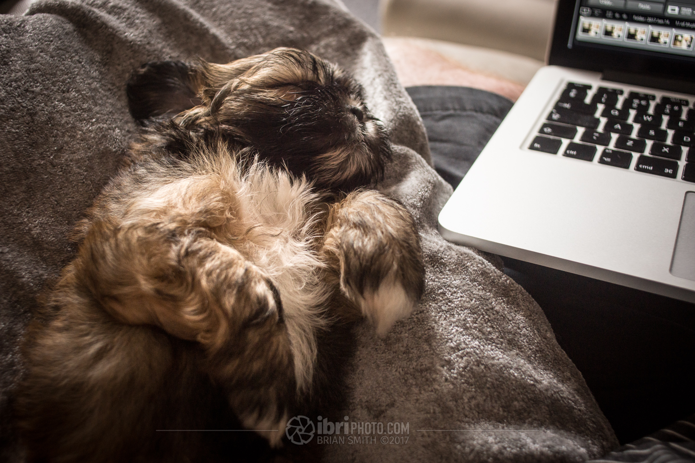 Not easy editing on the laptop with a Lhasa Apso pup parked on your lap top.