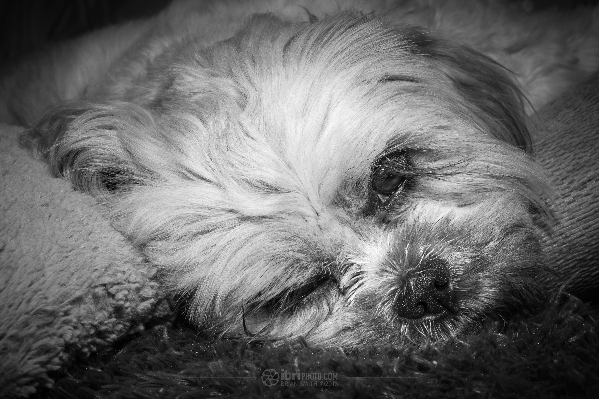 1/200 sec - f11 - ISO 100 - Flash with modifier. Edited and converted to black and white in Adobe Lightroom