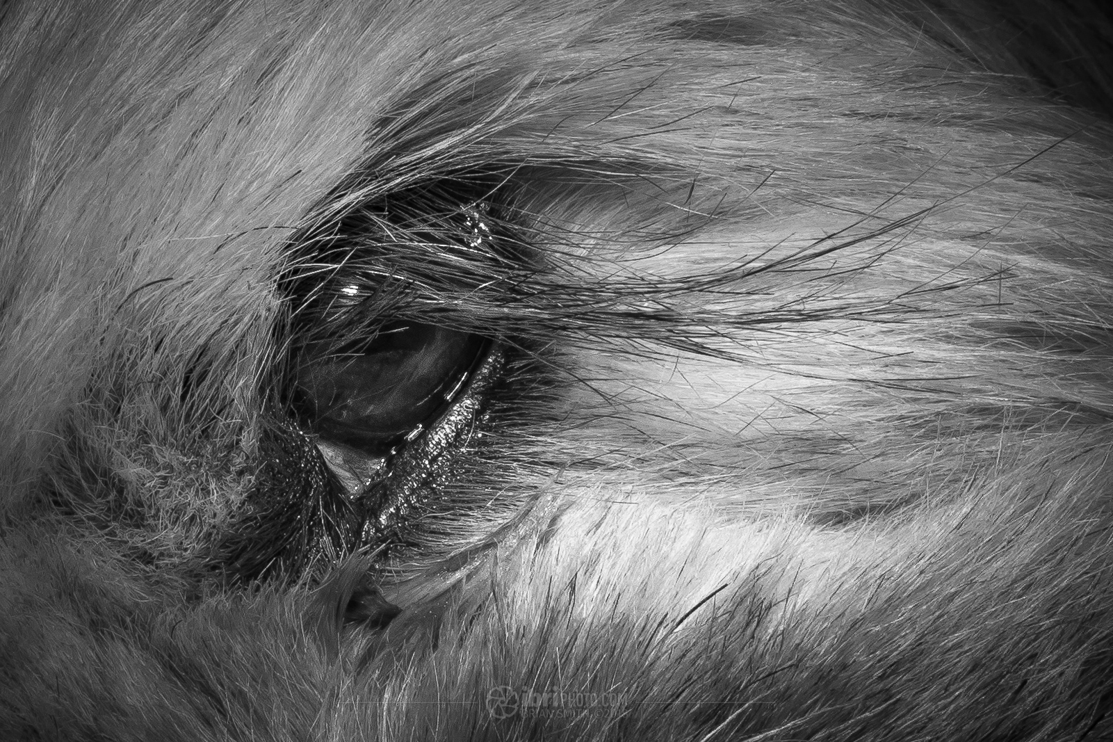 A close-up of Poppy's freakily long eyelash, showing how much detail this lens captures. Click for full screen...