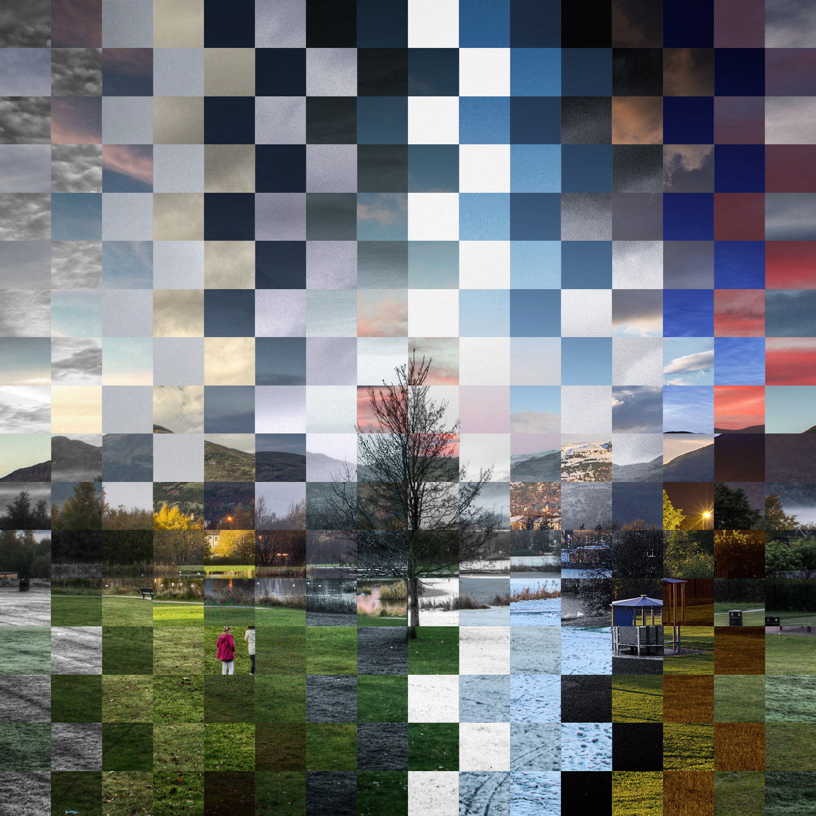 Delph Tree checkerboard.jpg