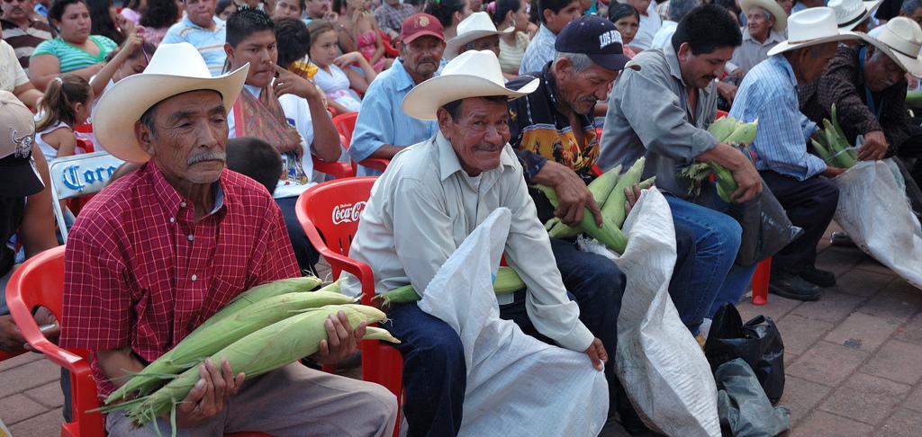 Mexican corn farmers