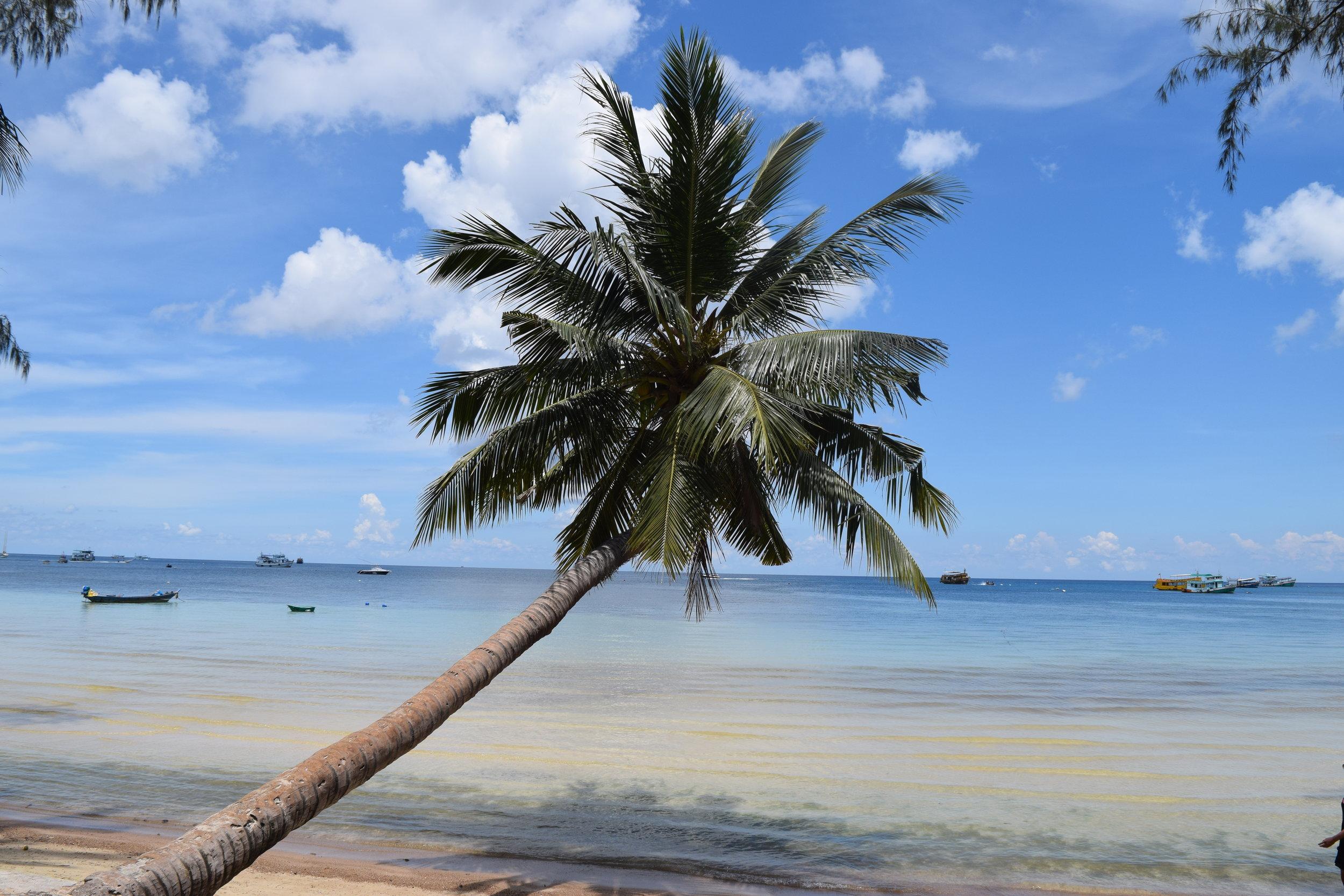 Una classica palma in una classica spiaggia thailandese con classica acqua cristallina. Piantate l'ombrellone. Non ci si muove da qui.