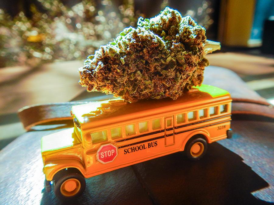 900-nug-on-a-bus.jpg