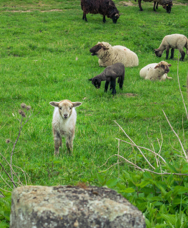 Oberkassel-Sheep-Dusseldorf-Brown-Leather-Book-21.jpg