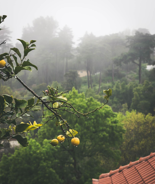 When life gives you lemons.jpg