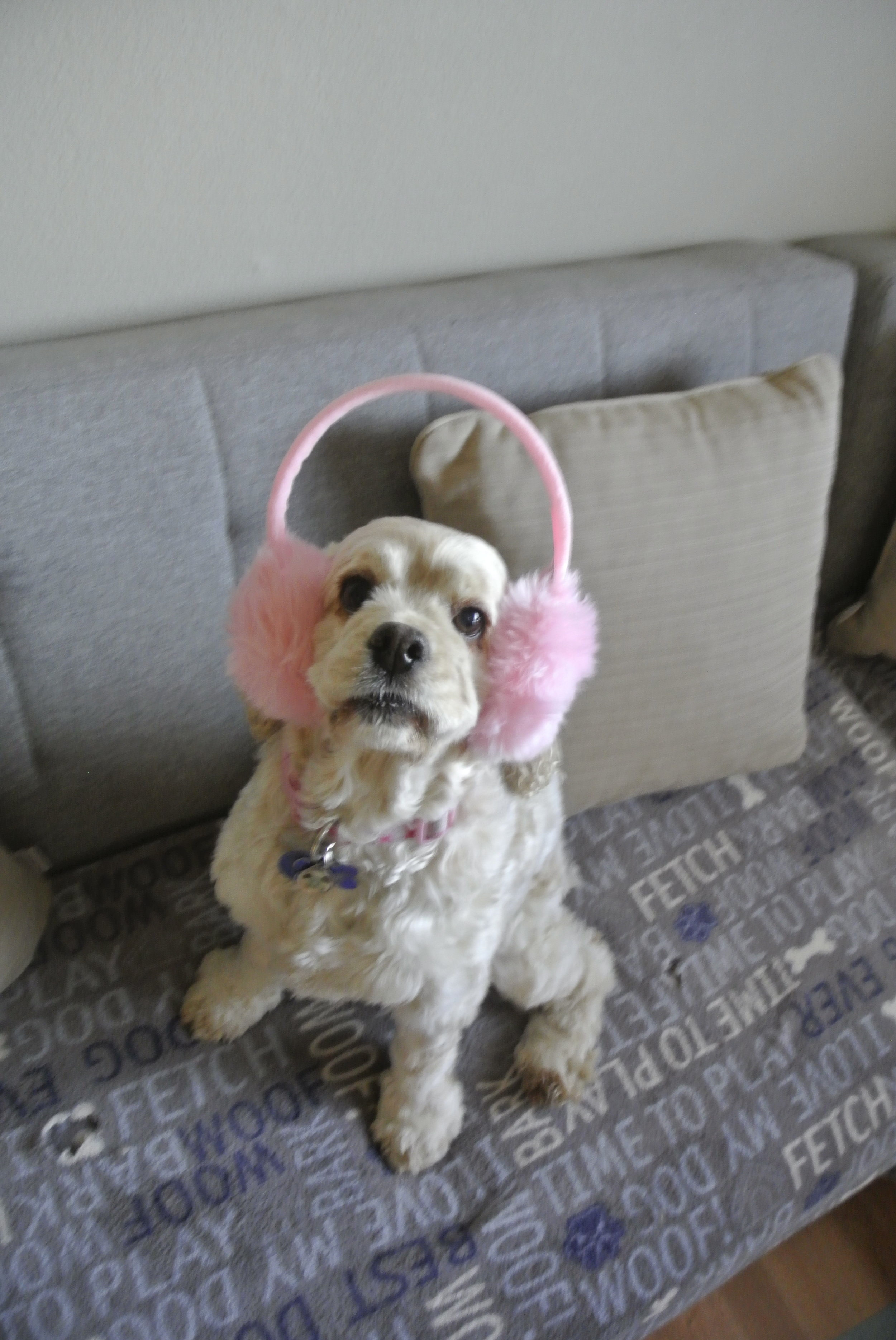 Cold day in LA: Chilly Lily in her earmuffs!