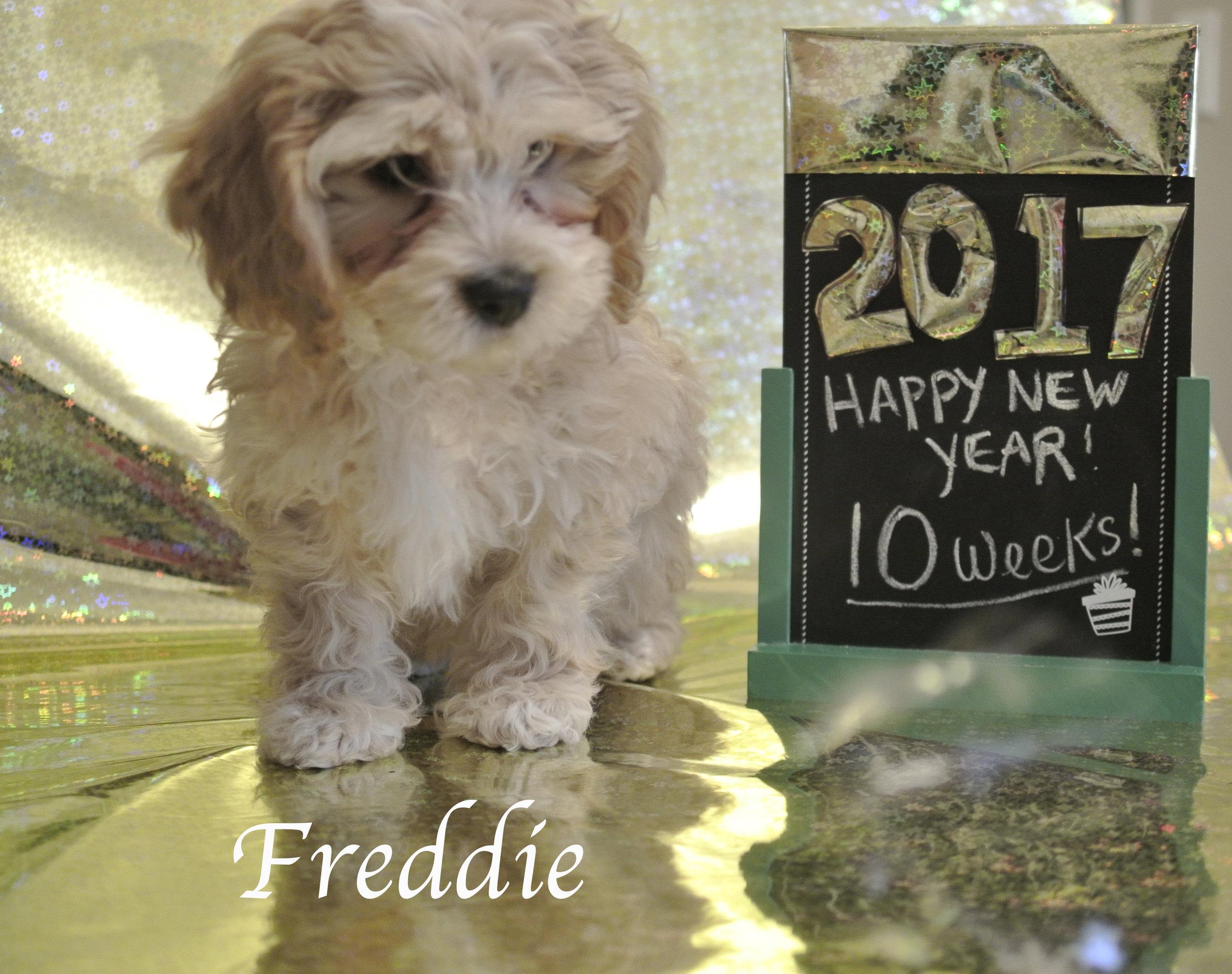Freddie10.jpg
