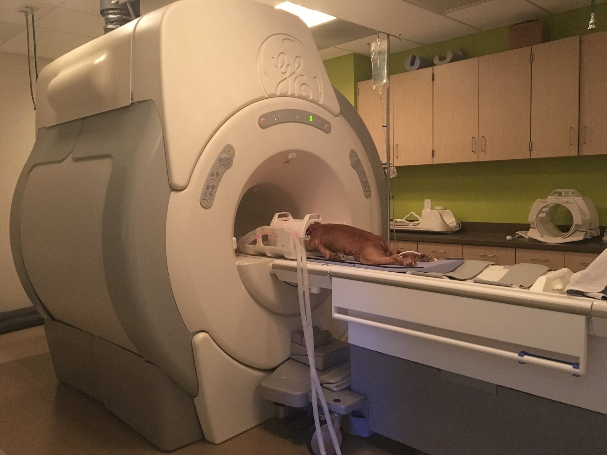 Morgan gets an MRI