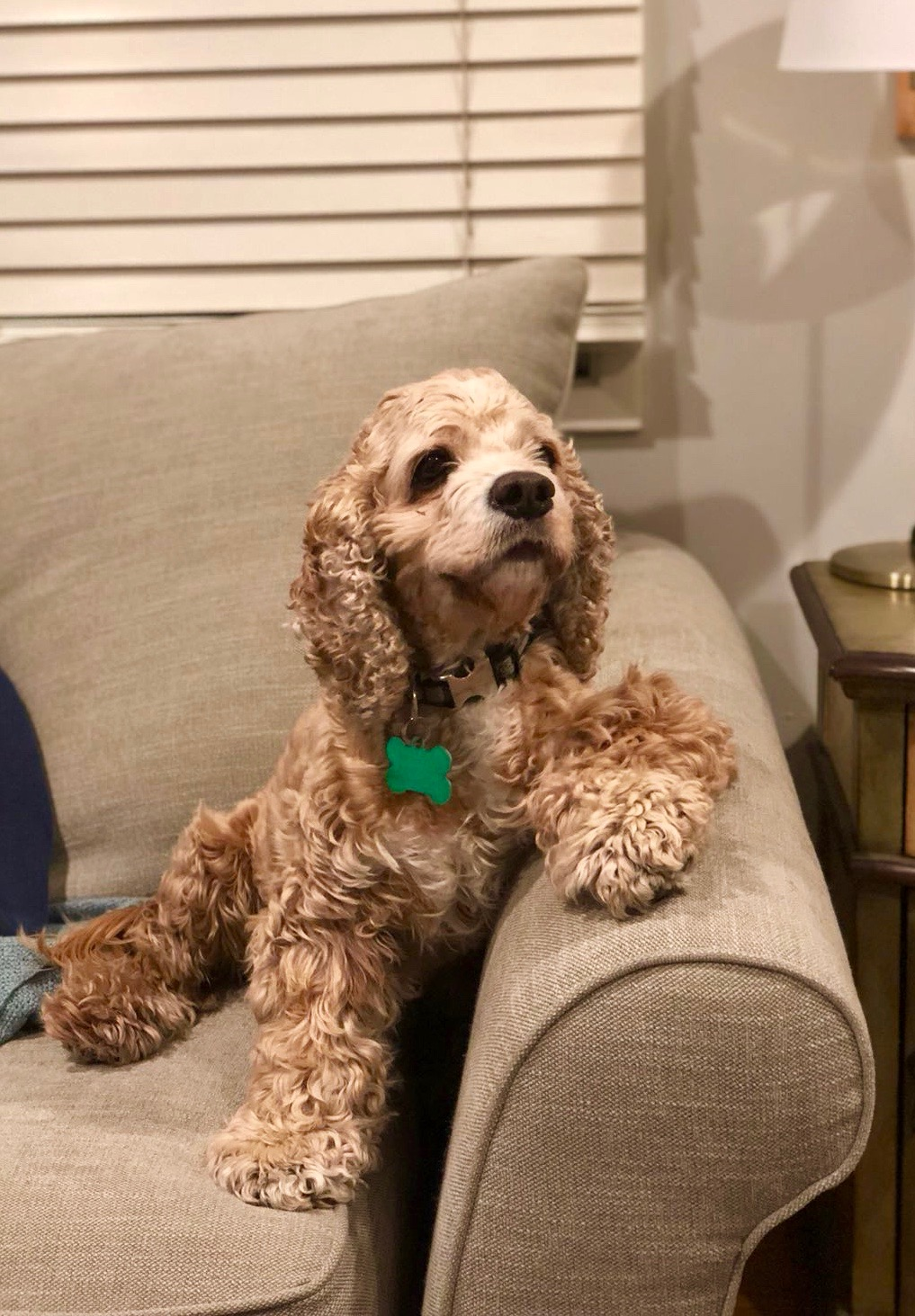 Dudley sits on the couch like this.jpg