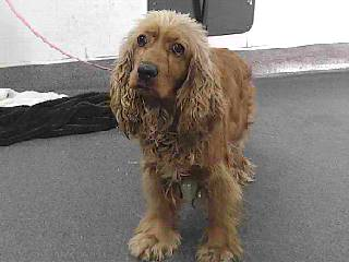 Sienna in the shelter. Her fur was terribly matted.