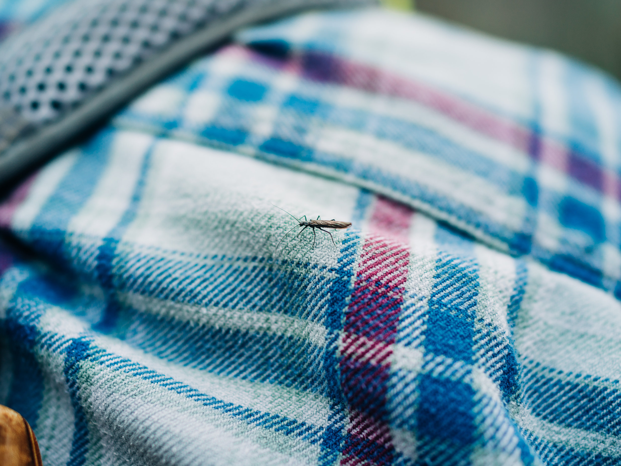 A wee stonefly taking a break on my shoulder.