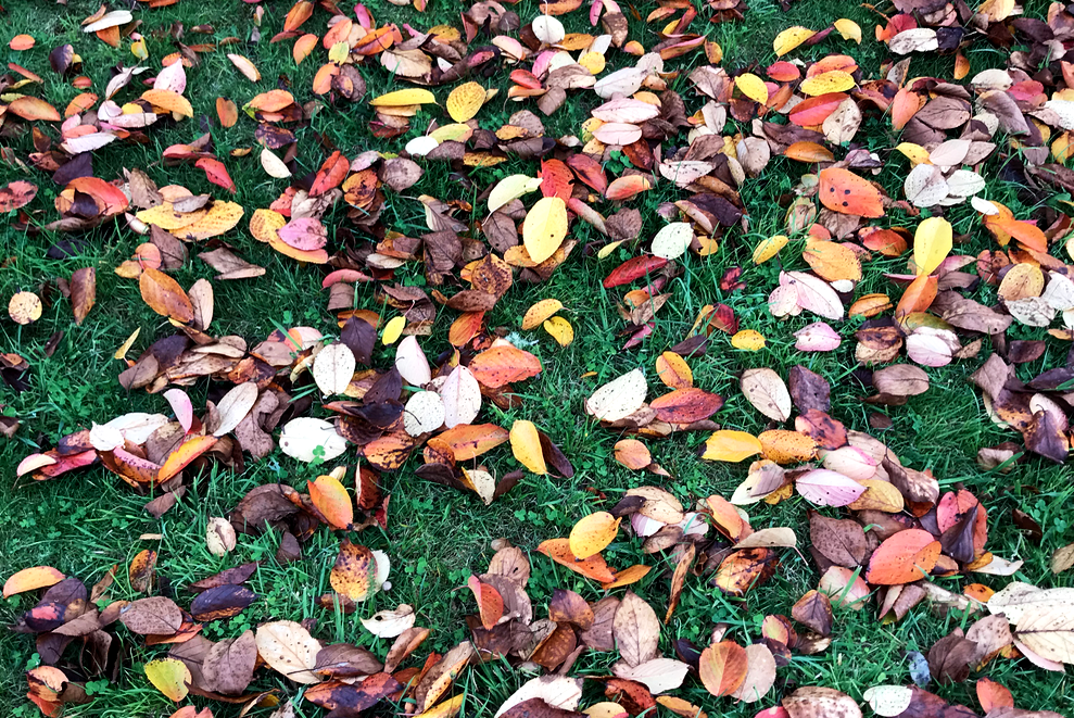 AutumnalLeaves-Cropped.png