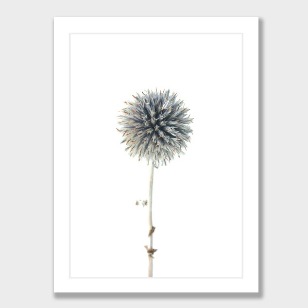 Thistle by Cloud 9 Creative