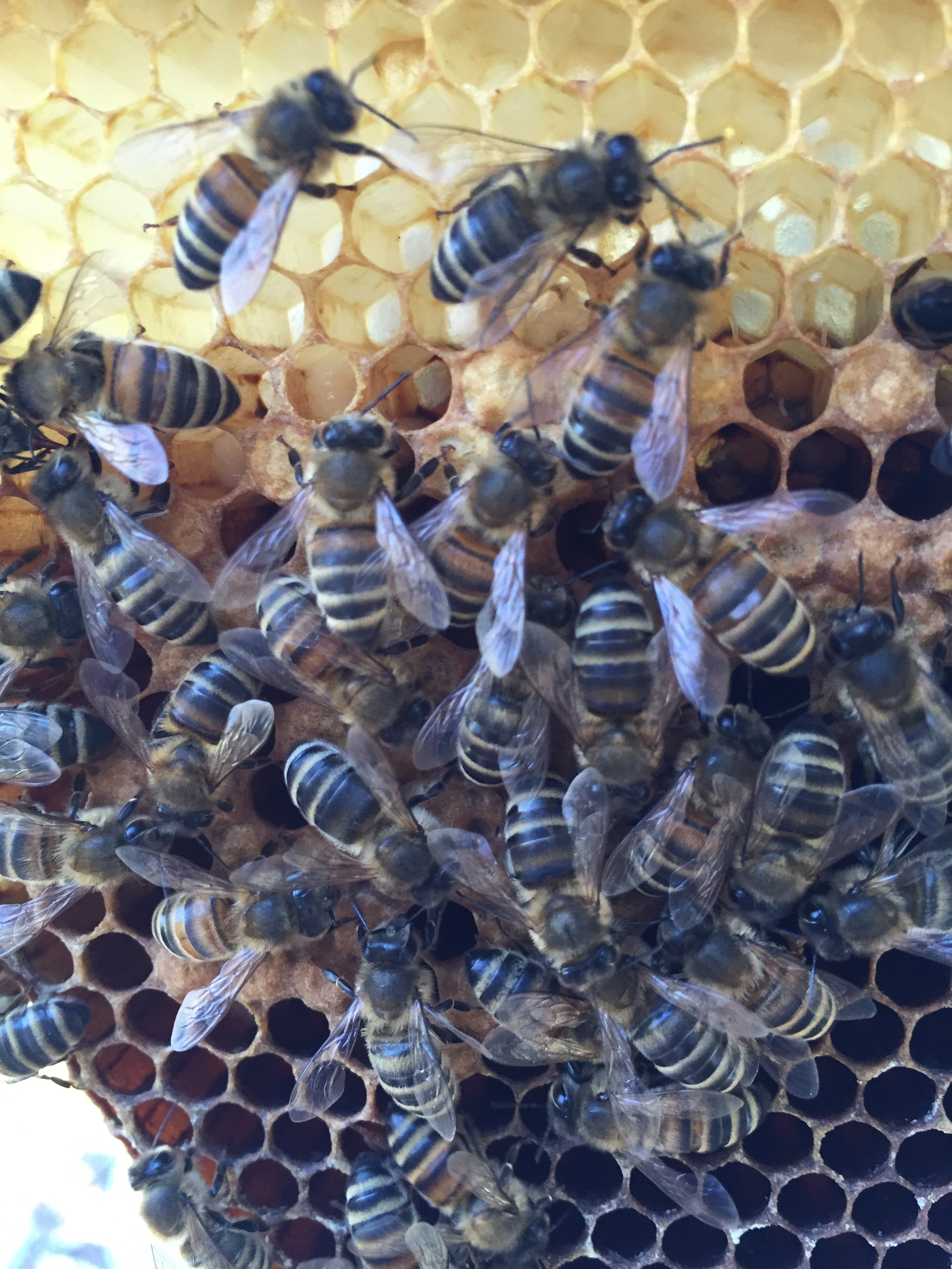 House bees working near the brood