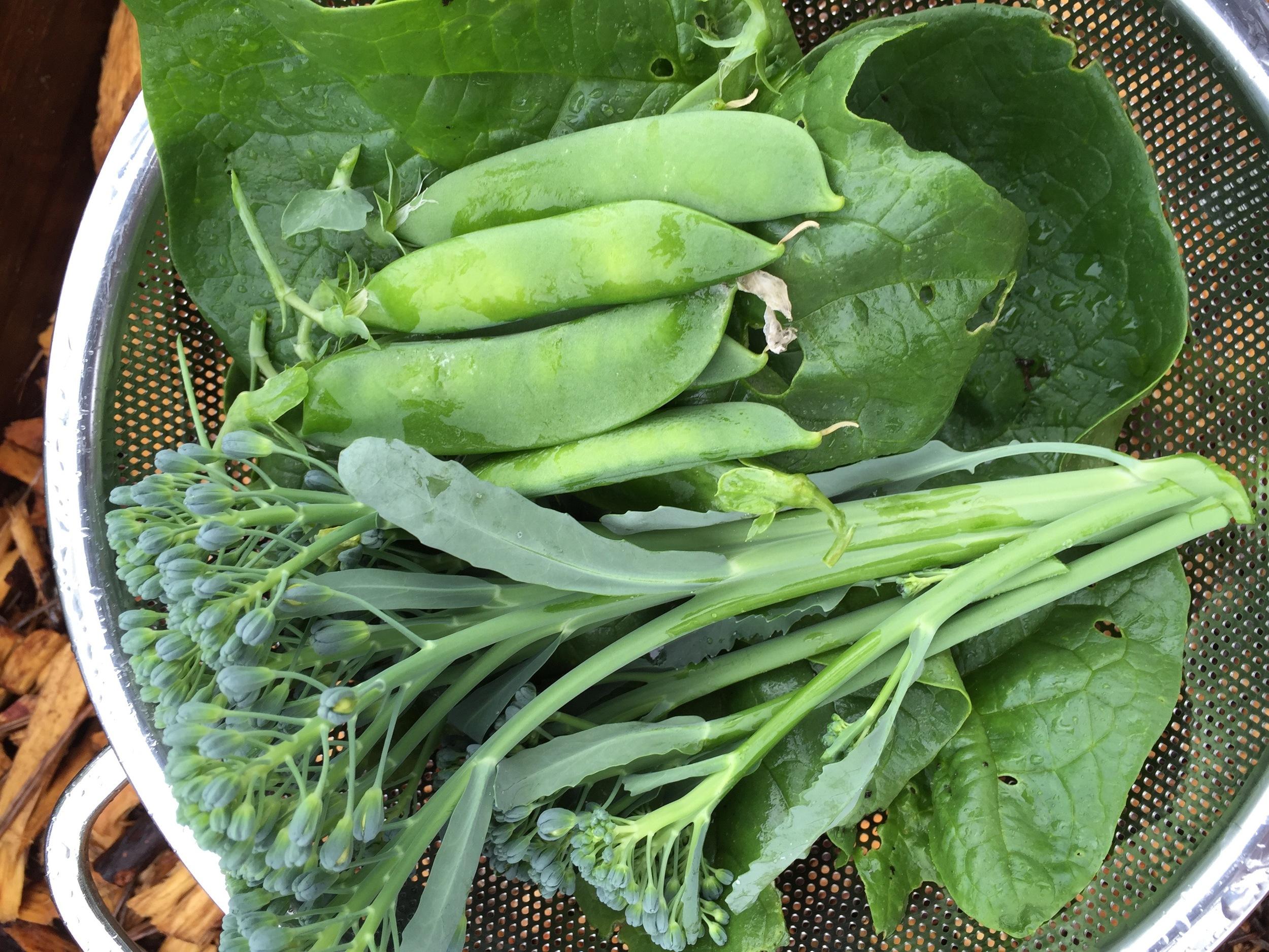 Spinach, Broccoli, Shelling Peas